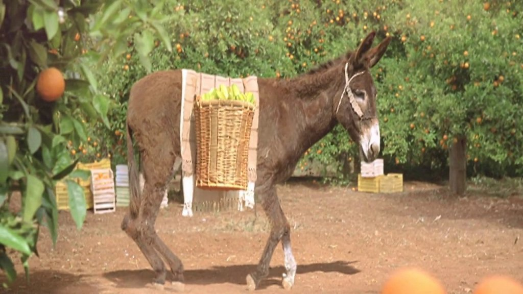 Appelsientje - Donkey